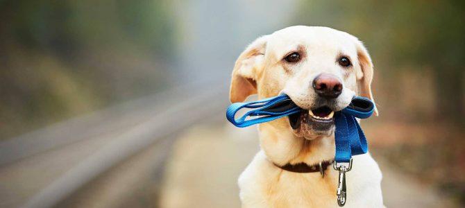 Rolul animalelor de companie este să ne învețe să iubim, nicidecum să substituie iubirea!
